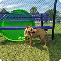 Adopt A Pet :: Sassy - CASCADE, WI