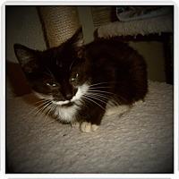 Adopt A Pet :: ARNIE - Medford, WI
