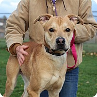 Adopt A Pet :: Marko - Elyria, OH