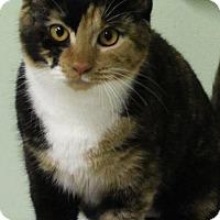 Adopt A Pet :: Sierra - Murphysboro, IL