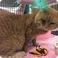 Adopt A Pet :: Gonkle - Janesville, WI