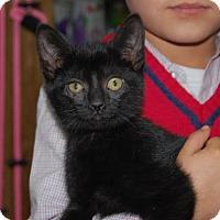 Adopt A Pet :: Franny - Brooklyn, NY