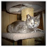 Adopt A Pet :: HARMONY - Medford, WI