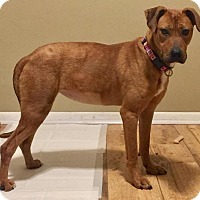 Adopt A Pet :: Penny - Sterling Heights, MI