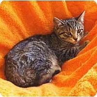 Adopt A Pet :: Elaine - Colmar, PA