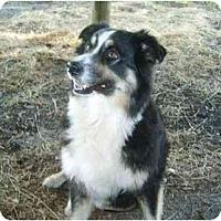 Adopt A Pet :: Kanga - Orlando, FL
