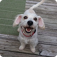 Adopt A Pet :: Buster - Kingwood, TX