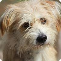 Adopt A Pet :: Wessex - Norwalk, CT