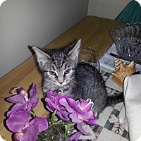 Adopt A Pet :: zz 'Arianna' courtesy listing - Cincinnati, OH