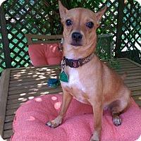 Adopt A Pet :: Cricket - Charlestown, RI