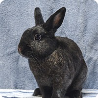 Adopt A Pet :: Midnight - Fountain Valley, CA