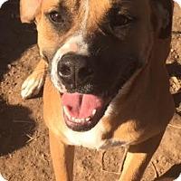 Adopt A Pet :: Maggie meet me 12/11 - Manchester, CT