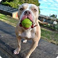Adopt A Pet :: ChaCha! - Oakland, CA