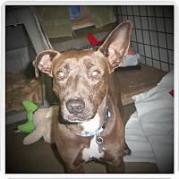 Adopt A Pet :: NALA - Medford, WI