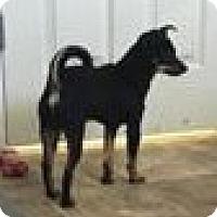 Adopt A Pet :: Libra - Lewisburg, TN