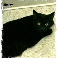 Adopt A Pet :: Jimmy - Covington, KY
