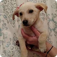 Adopt A Pet :: Teal - West Bend, WI