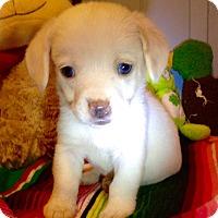 Adopt A Pet :: Hardy (ARSG) - Santa Ana, CA