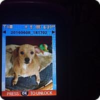 Adopt A Pet :: Tinker - conroe, TX