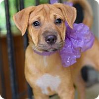 Adopt A Pet :: Livia - Baton Rouge, LA