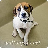Adopt A Pet :: Beulah-LOCAL - Lebanon, ME