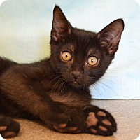 Adopt A Pet :: Joey - Larned, KS
