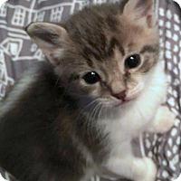 Adopt A Pet :: Zander - Conroe, TX