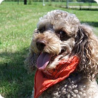 Adopt A Pet :: Ceasar - Bowmanville, ON
