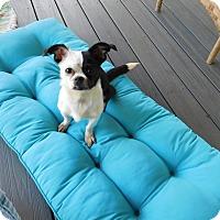 Adopt A Pet :: DeeDee - West Deptford, NJ