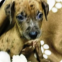 Adopt A Pet :: PUPPY-ANDY - DeLand, FL