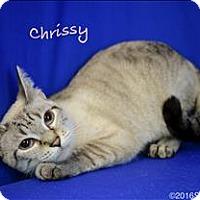 Adopt A Pet :: Chrissy - Sherwood, OR