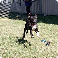 Adopt A Pet :: Elena Kagan - Jersey City, NJ