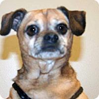 Adopt A Pet :: Donald - Wildomar, CA