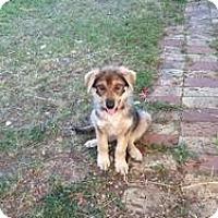 Adopt A Pet :: Valkyrie - Saskatoon, SK