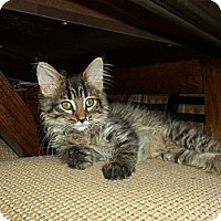 Adopt A Pet :: Miller - Sterling Hgts, MI