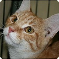 Adopt A Pet :: Tanner - Walkersville, MD