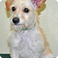 Adopt A Pet :: Mindy - Port Washington, NY