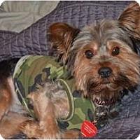 Adopt A Pet :: Leo - Spring Hill, FL