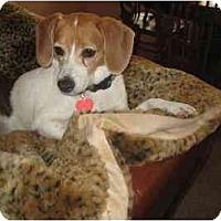 Adopt A Pet :: Sunshine Buttercup - Phoenix, AZ