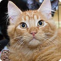 Adopt A Pet :: Gum Drop - Irvine, CA