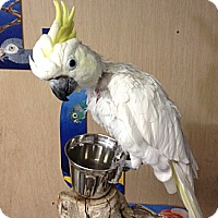 Adopt A Pet :: Moe - Woodbridge, NJ