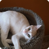 Adopt A Pet :: Lacy - San Fernando Valley, CA