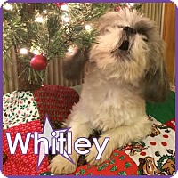 Adopt A Pet :: Whitley - Excelsior, MN