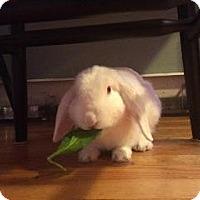 Adopt A Pet :: sheldon - Woburn, MA