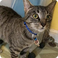 Adopt A Pet :: Caroline - Devon, PA