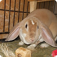 Adopt A Pet :: Annabelle - Williston, FL
