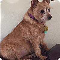 Adopt A Pet :: Carmen - Prole, IA