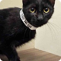 Adopt A Pet :: Simone - Channahon, IL