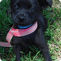 Adopt A Pet :: Vice - Batesville, AR