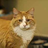 Adopt A Pet :: Red Star - Grayslake, IL